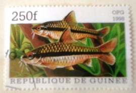 Selo postal Republica Guinee 1998 Barb (Barbodes miolepis)