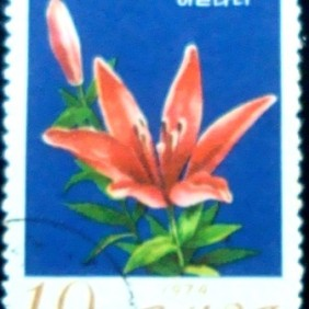 1974 - Shooting Star Lily