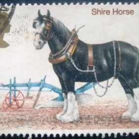 1978 - Shire Horse