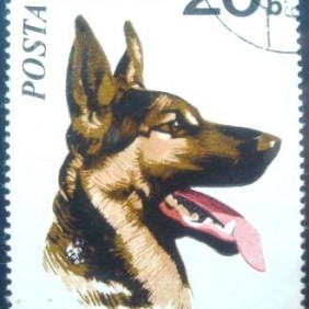 1971 - German Shepherd