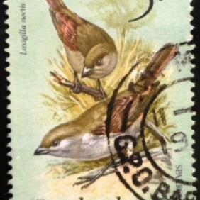 1979 - Lesser Antillian Bullfinch